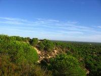 Paesaggio di Doñana