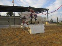 骑马和跳跃课