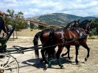 Saliendo de la cuadra en un carruaje de caballos