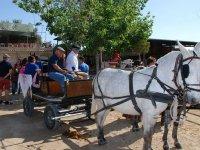 Paseo en carro de caballos en Alicante