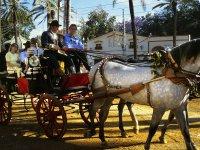 Ruta en carruaje de caballos