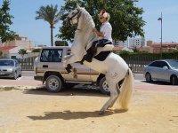 享受下午的骑马