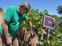 Wines very careful