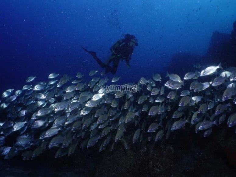 Buceando entre banco de peces