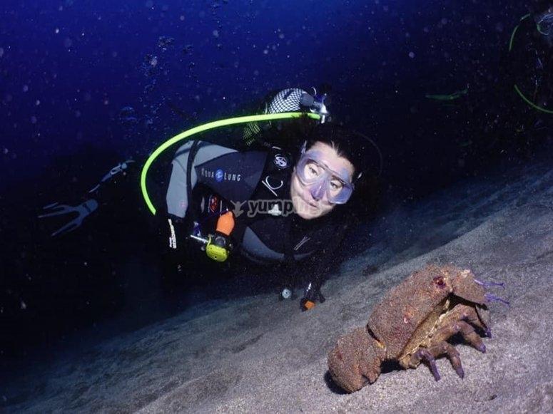 Paseo con animales submarinos