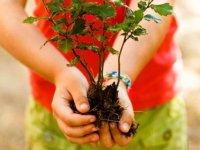 manos ensenando una planta