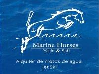 Marine Horses Paddle Surf