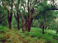P.N. Los Alcornocales