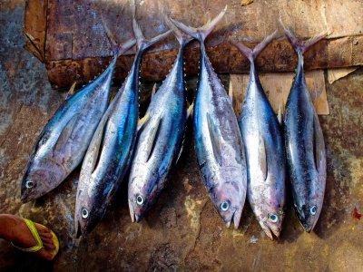 从Donostia港口钓鱼美丽16小时