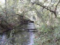 Stream e alberi