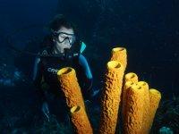 admirando las profundidades