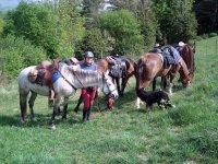 Con los caballos y el perro