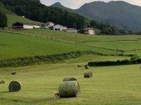 Navarrese landscapes
