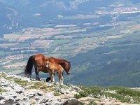 Views of the Urdax region on horseback