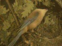 ornitologia