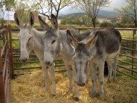 En la feria ganadera de Jerez del Marquesado