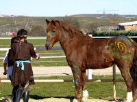Aprendiendo a tratar con caballos