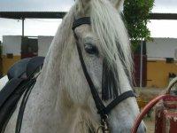 Primer plano de uno de nuestros caballos