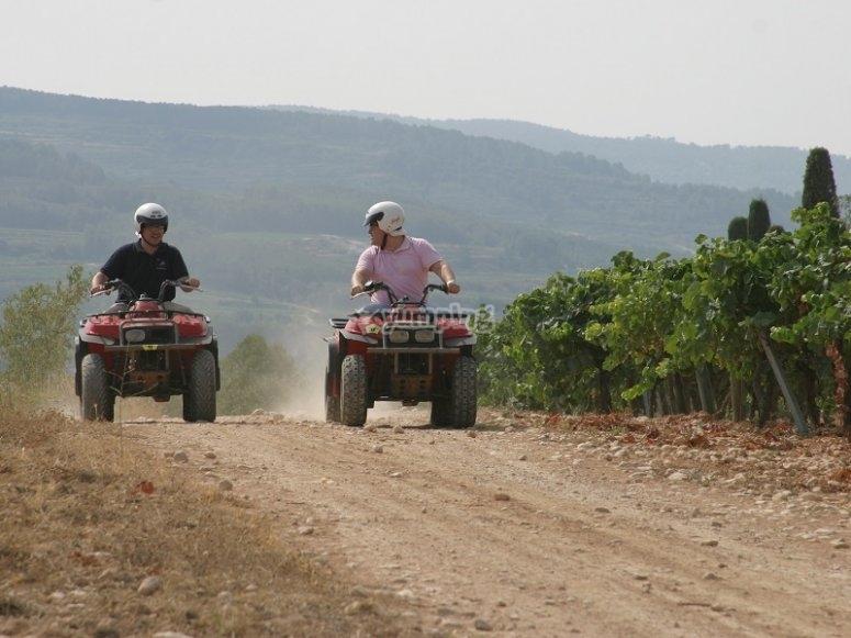 Drive a quad next the vineyards