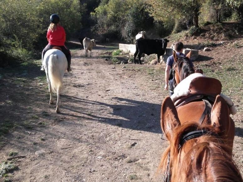 Caballos entre el ganado