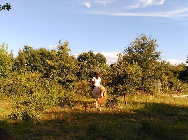 Experiencia a lomos del caballo