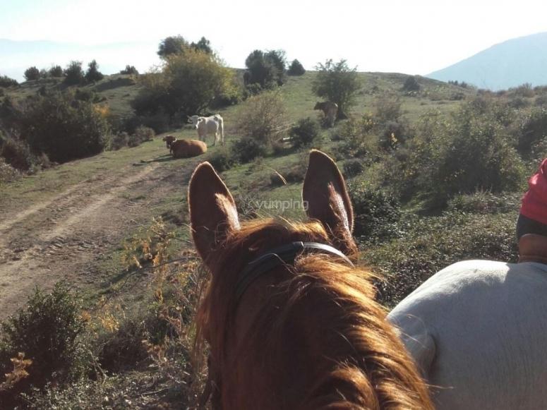 Viendo los paisajes desde los caballos