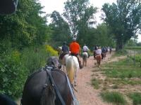 A caballo junto a los vinedos