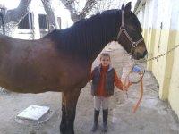 朋友照顾马匹