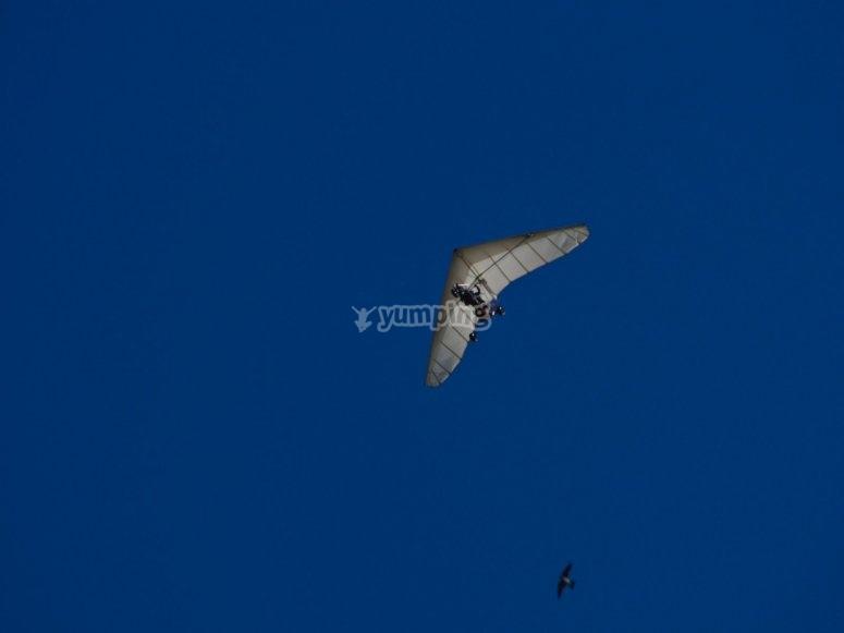 从地面看悬挂式滑翔机