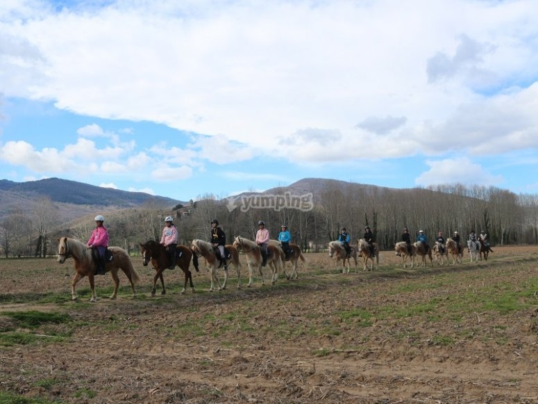 Fila di cavalli