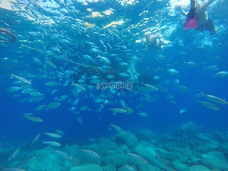 Snorkeling con banco de peces