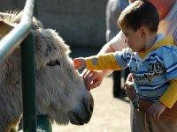 Paseo en burro para niños