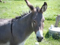 Conoce a nuestros burros