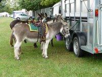 Nuestros burros te esperan