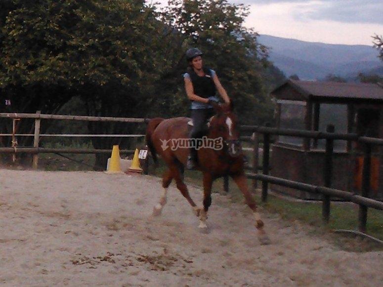 Un caballo adaptado a tus necesidades