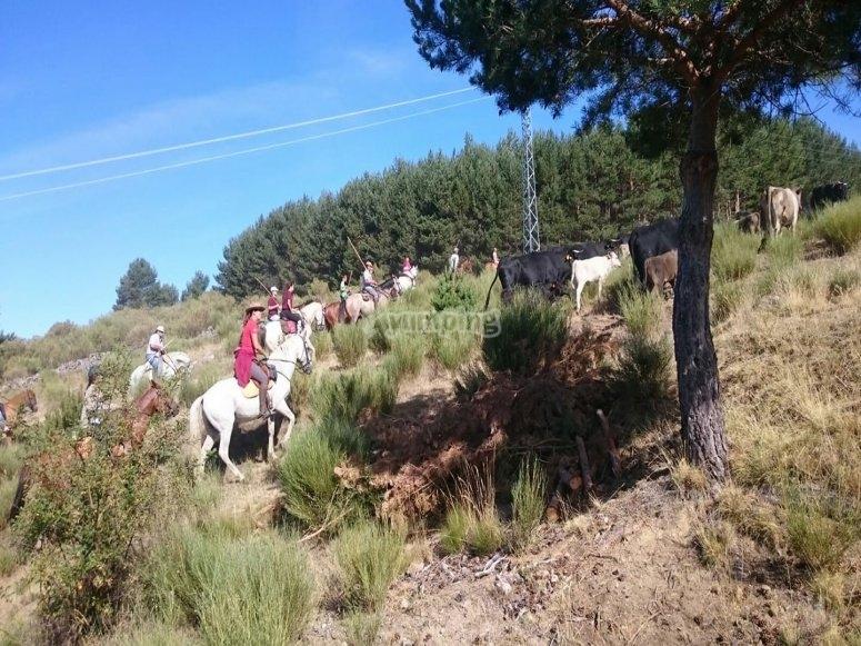 Una ruta diferente en Madrid