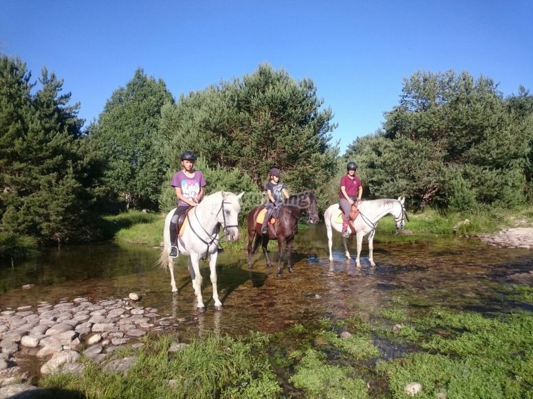 Over the horses in the creek