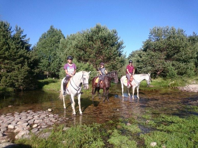 Sobre los caballos en el riachuelo