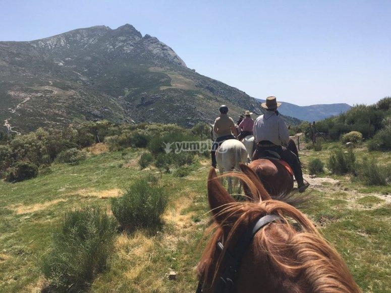 En el monte de El Pardo