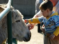 测试自己的驴步道塞维利亚