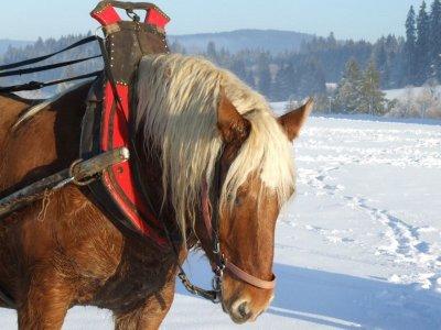 Montar en trineo equino en Baqueira Beret niños 1h