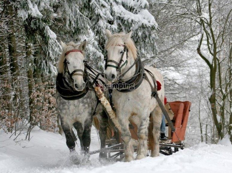 马术雪橇的骑行