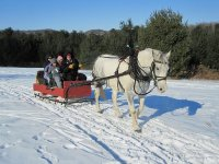 An sled and a horse