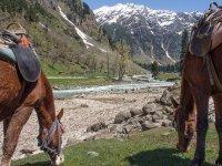Montar a caballo en Baqueira Beret durante 1 hora