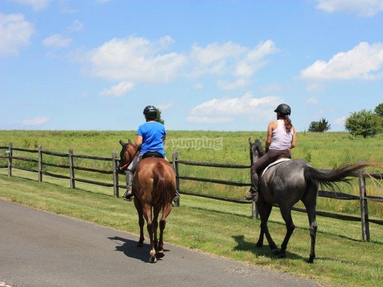 Pareja de caballos al paso
