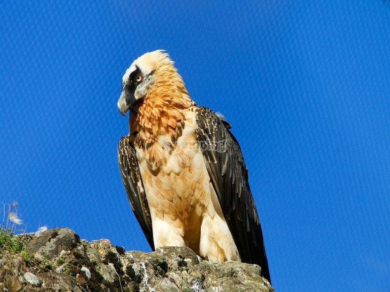 Majestuosas aves sobre nosotros