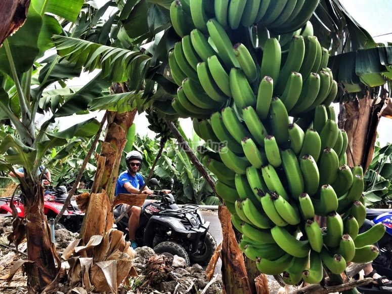 Across the banana plantations