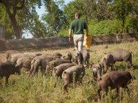 nuestros cerdos ibericos
