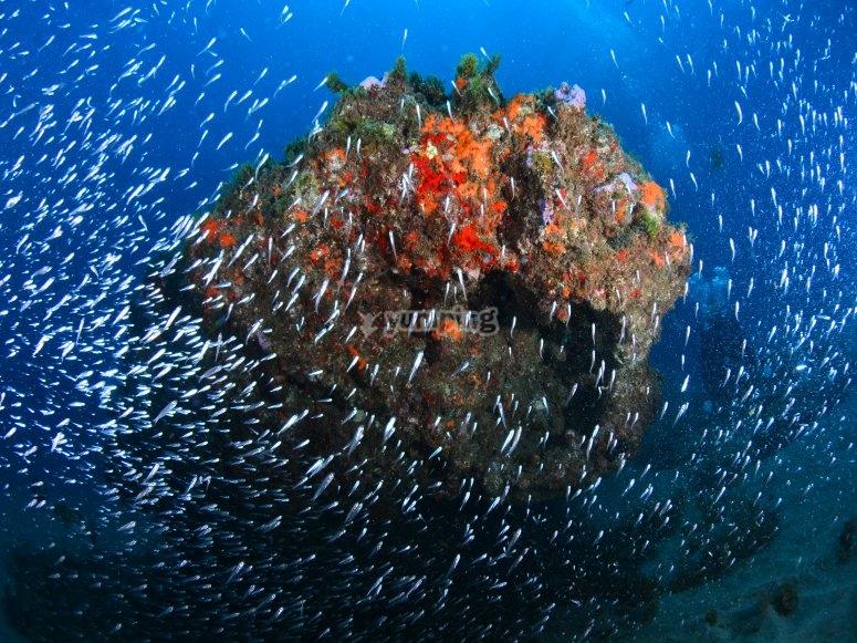 Increible banco de peces