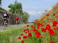 Vía Verde Tajuña Bicicleta 3 días Arganda del Rey
